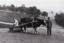 Karl Kürten, Linden, (rechts) und Daniel Schröder, Stöcken, (links) mit dem Bloch (Blauch = Walze) Anfang der 1920er Jahre auf dem Feld.