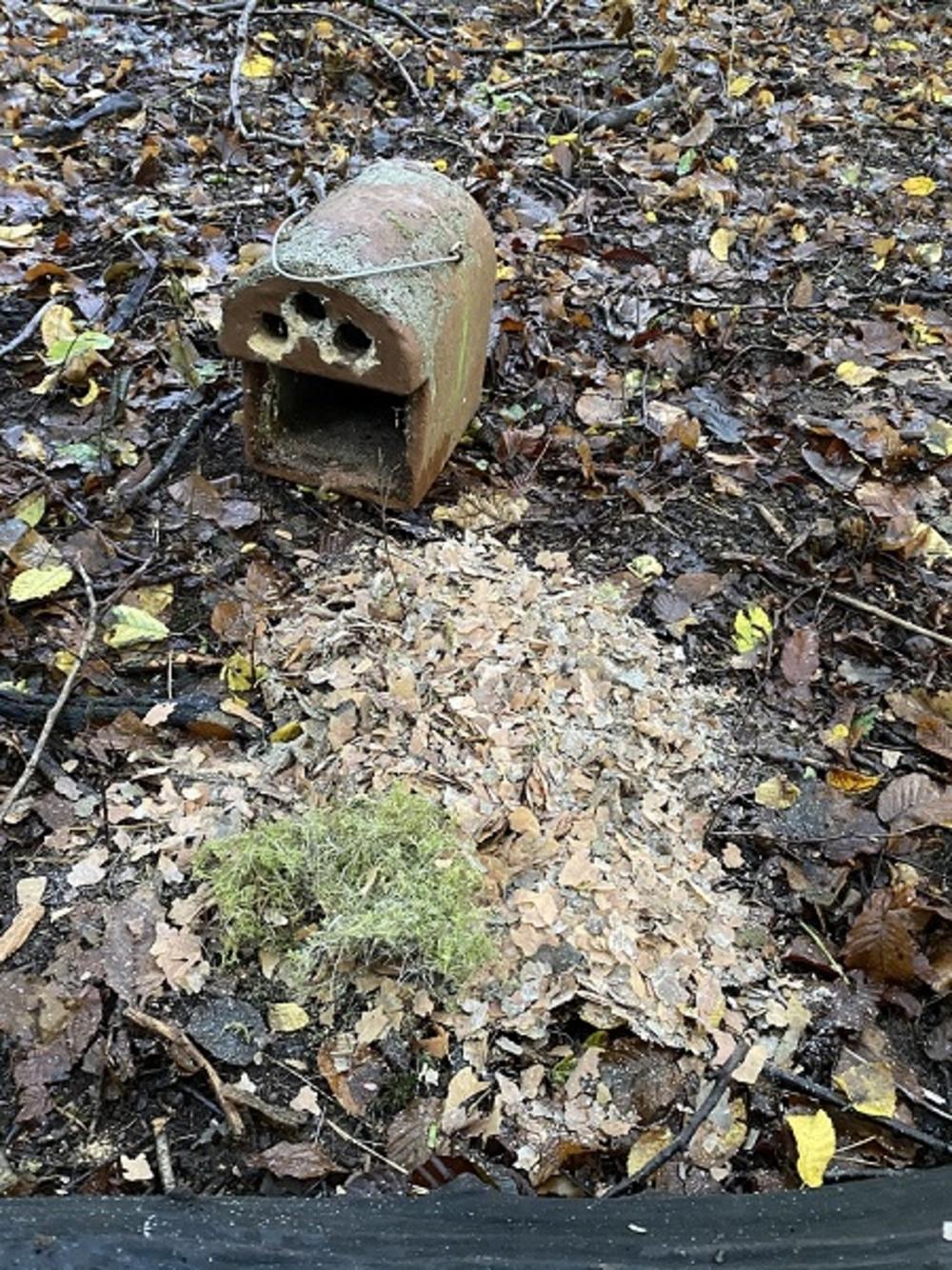 Nistkasten mit Nest Kleiber 3 Rundlöcher sind aufgepickt vom Specht