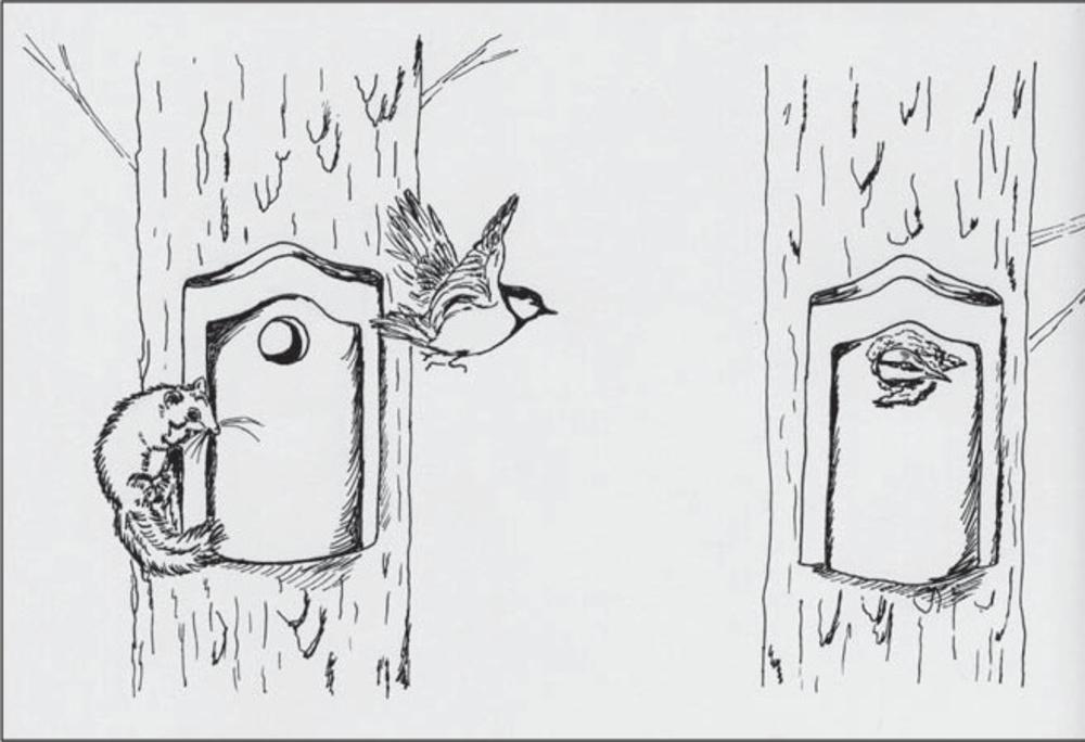 """Ökologisches Szenario: Siebenschläfer erwachen bedingt durch die Klimaerwärmung früher aus dem Winterschlaf und treten in Nistplatz-Konkurrenz zu Kohlmeisen (links), bzw. fressen deren Jungen. Kleiber hingegen bleiben vermutlich verschont, da sie die Höhlenöffnungen mit Lehm """"zukleistern"""" und so Siebenschläfer nicht eindringen können (rechts). Zeichnung: S. N. de Visser."""